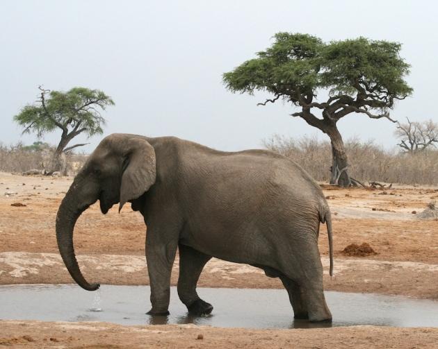 elephant-2007img_1591_2