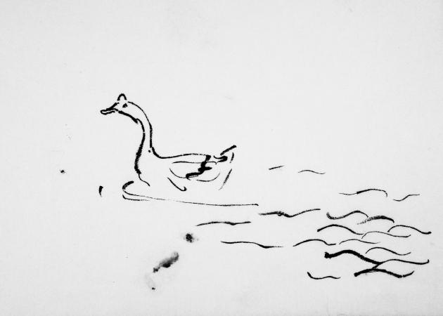 duck-02266