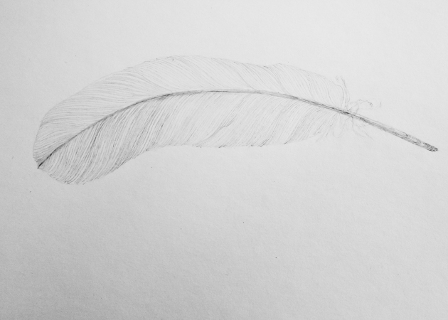 feather2-02162